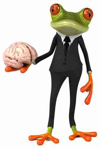 Brain showing the science behind good web design and conversion rate optimisation