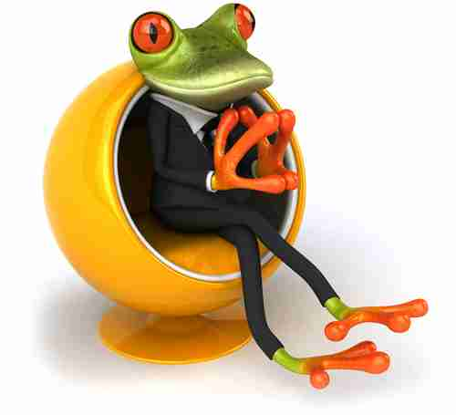 Blackstone Moss frog thinking about web design and marketing - Melbourne
